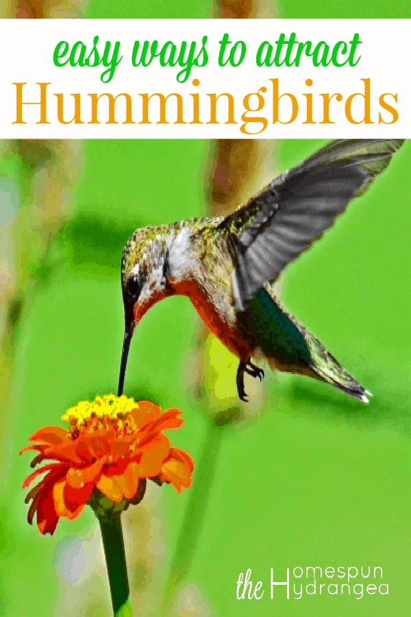 12 Ways To Attract Hummingbirds To Your Yard