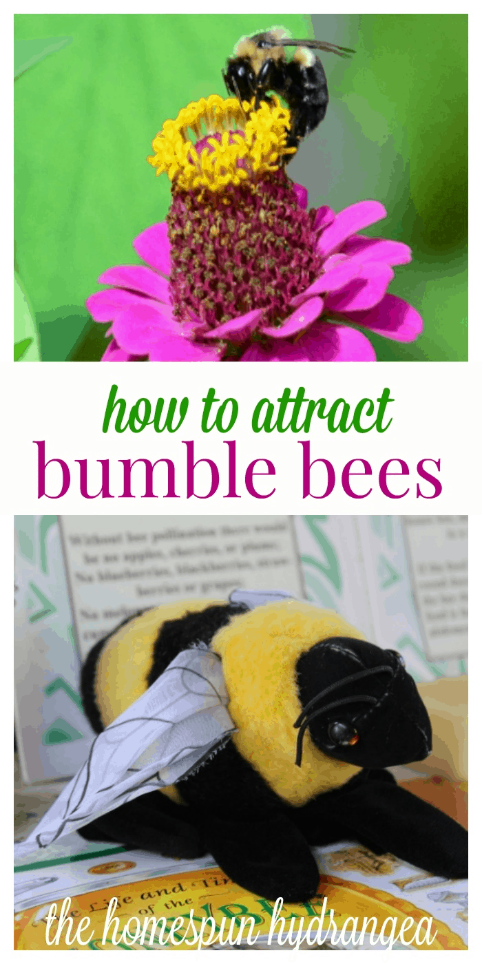 12 ways to attract bumble bees to your garden the homespun hydrangea