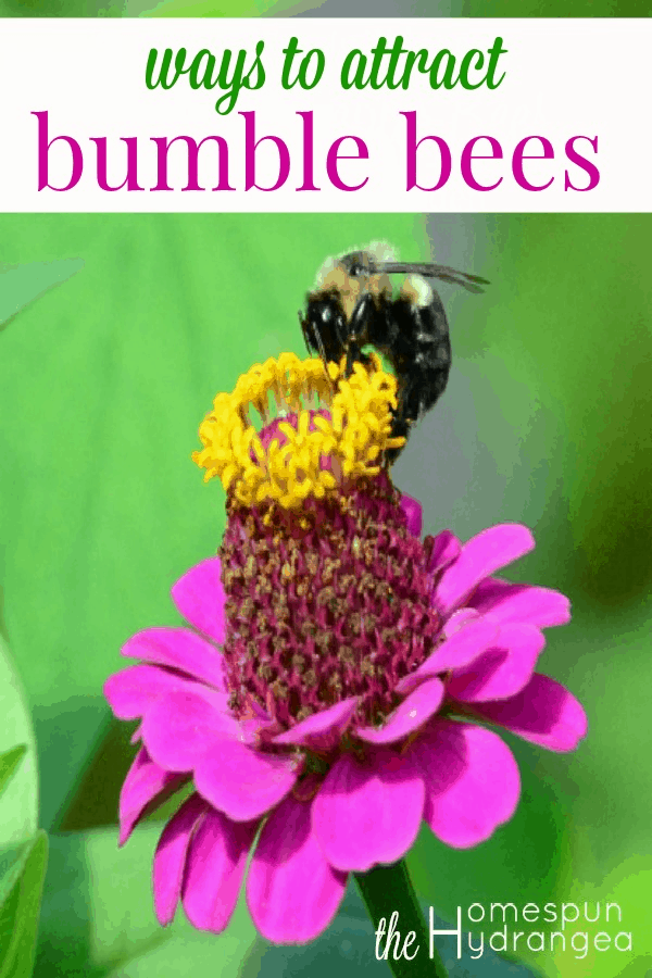 howto attract bees to my vegetable garden