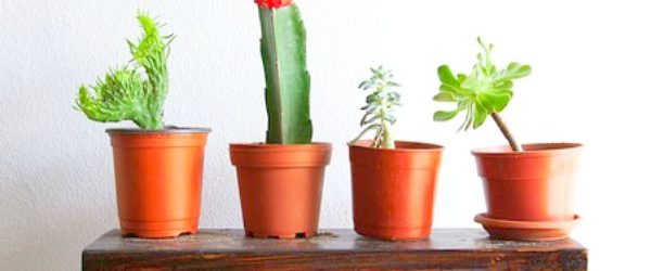 5 Reasons Your Succulents are Dying and What to Do - The Homespun