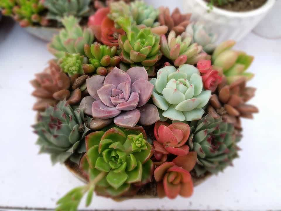 5 Reasons Your Succulents are Dying and What to Do - The