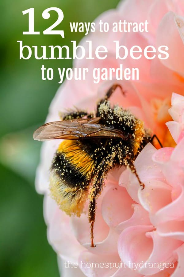 12 Ways to Attract Bumble Bees to Your Garden - The Homespun