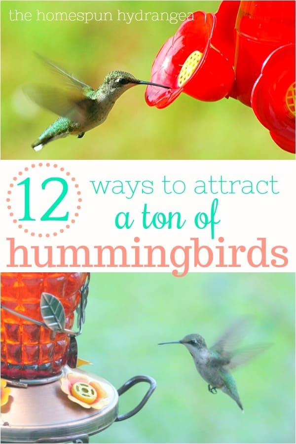 12 Ways To Attract Hummingbirds To Your Yard The Homespun Hydrangea